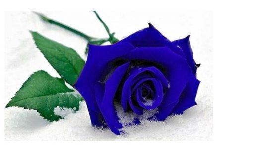 Contoh Puisi Cinta LDR yang Romantis