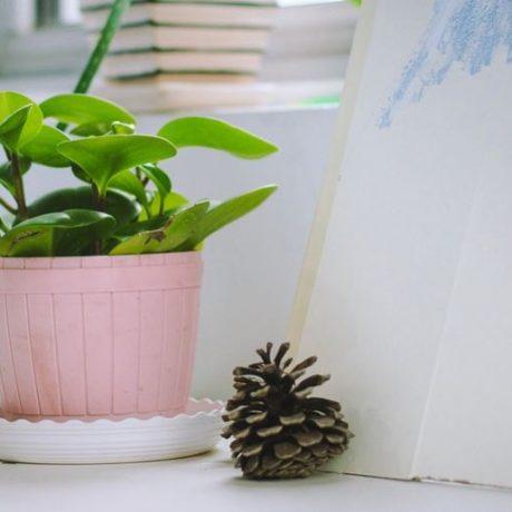 Rokomendasi 5 Tanaman Hias Indoor Yang Keren Banget